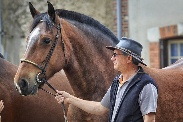 kůň s chovatelem